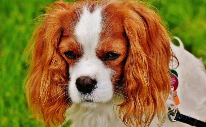 Free Bag of Dog Food at Pet Smart