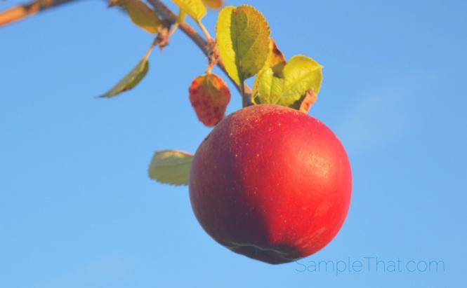 Apple & Eve Juice Coupon
