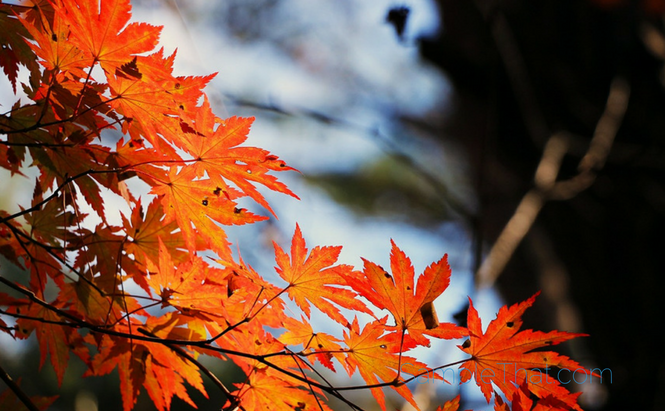 10 Reasons To Be Happy It's Fall