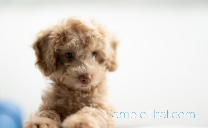 Free Puppy Shampoo Sample