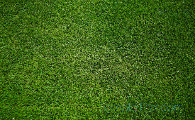 Free Sample of Artificial Grass
